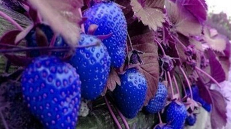 Make Your Garden A Beautiful Sight With Special Garden Seeds