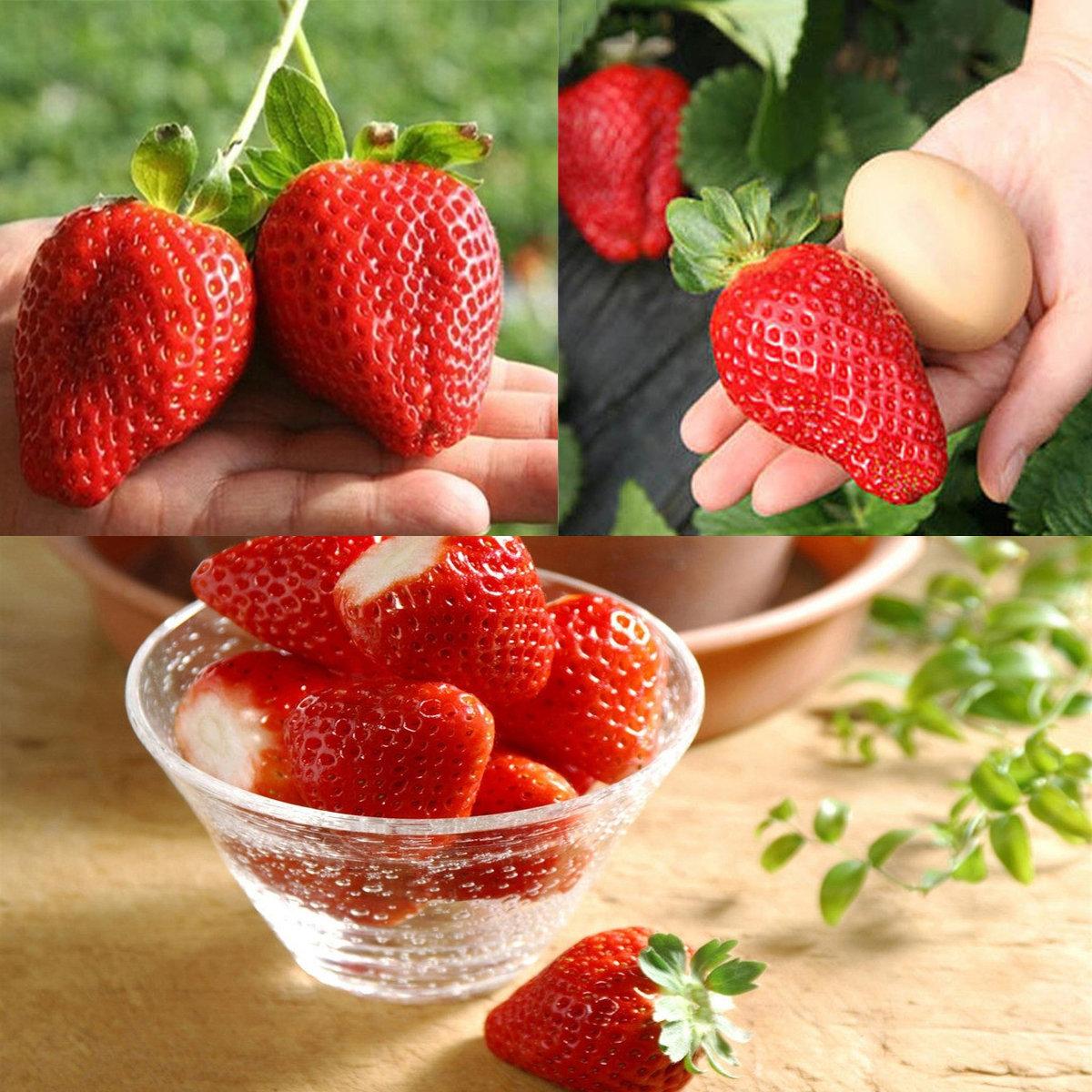 red strawberry seeds erdbeersaison